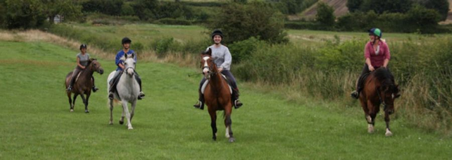 Cantering in the Barn Field