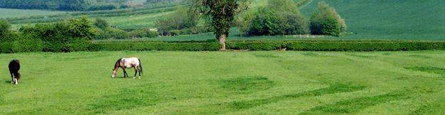 Harrowed field
