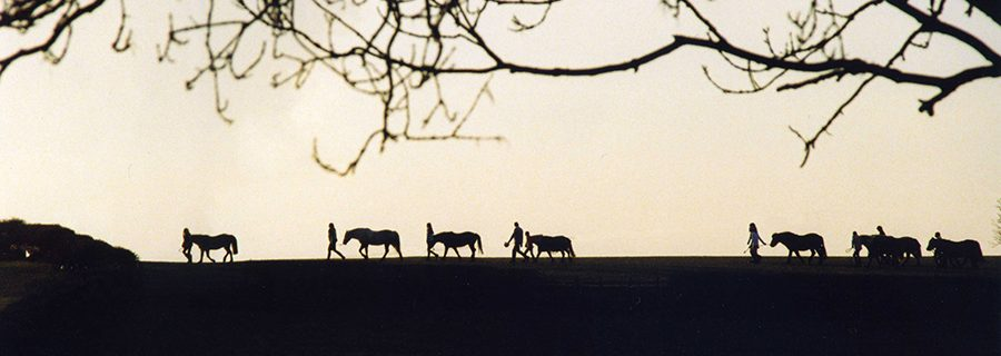 Ponies going home